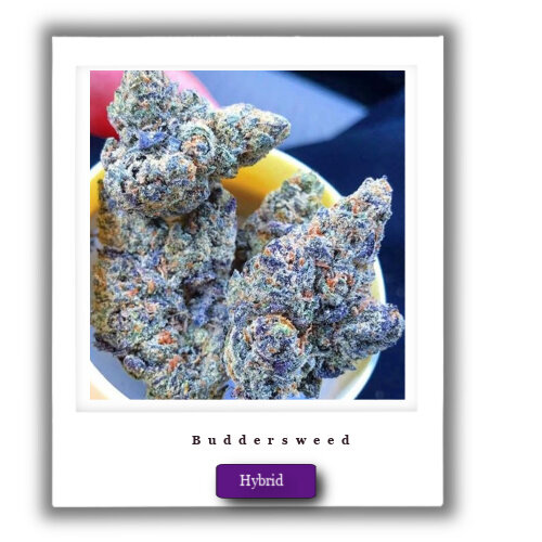 Best Marijuna Deals-Blue Cheese Marijuana Strain