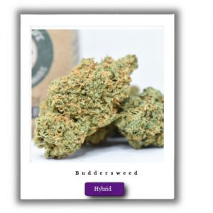 Buy Online Discreet and Safe-Bruce Banner Marijuana Strain