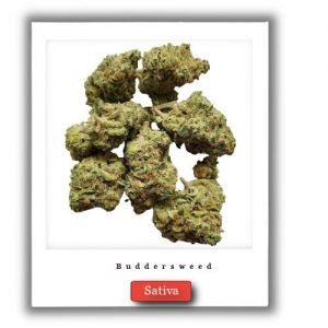 Buy Online Discreet and Safe-Durban Poison Sativa Marijuana strain,