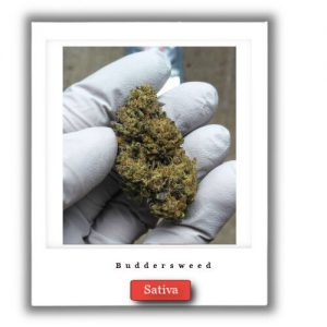 Best Weed Deals-Durban Poison Sativa Marijuana strain,