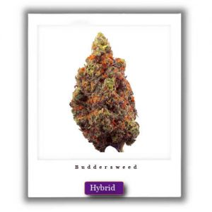 Best Weed Deals-Blissful Wizard Hybrid Marijuana Strain