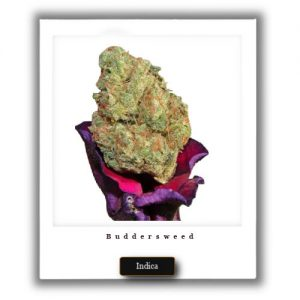 Best Weed Deals-God's Gift Indica Marijuana Strain
