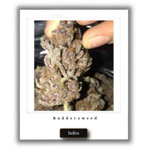 Best Weed Deals-Granddaddy Purple Indica Marijuana Strain