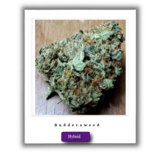 Buy Online Discreet and Safe-Girl Scout Cookies Indica-Dominant Hybrid marijuana