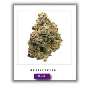 Best Marijuna Deals-Girl Scout Cookies Indica-Dominant Hybrid marijuana