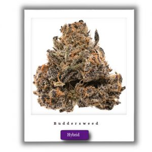 Mail order High Potent Cherry Pie Hybrid marijuana