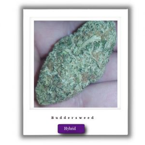 Buy Online Discreet and Safe-High Potent Cherry Pie Hybrid marijuana