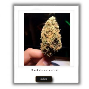 best Weed deal- high THC Indica Bubble Gum Strain