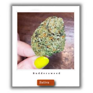 Best Weed Deals-Green Crack  Sativa Marijuana Strain