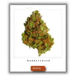 Best Weed Deals-Harlequin  Sativa Marijuana Strain