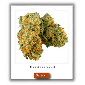 Buy Online Discreet and Safe-Harlequin  Sativa Marijuana Strain