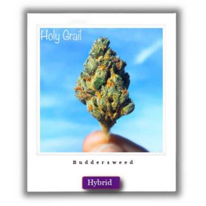 Buy Online Discreet and Safe-Holy Grail Hybrid Marijuana Strain