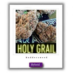 Best Weed Deals-Holy Grail Hybrid Marijuana Strain