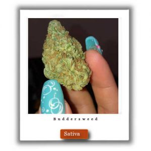 Best Weed Deals-Lemon Thai Sativa Marijuana Strain
