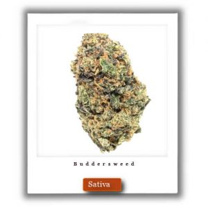 Buy Online Discreet and Safe-Lemon Thai Sativa Marijuana Strain