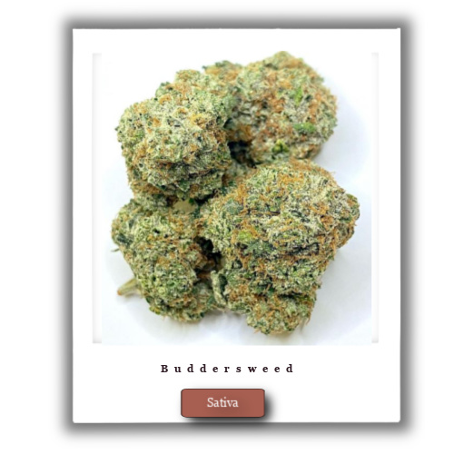 Buy High THC Lemon Jack Marijuana strain