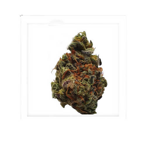 Granddaddy Purple-weed for sale