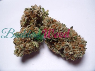 Blackberry Kush for sale