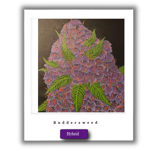 Girl Scout Cookies weed deals