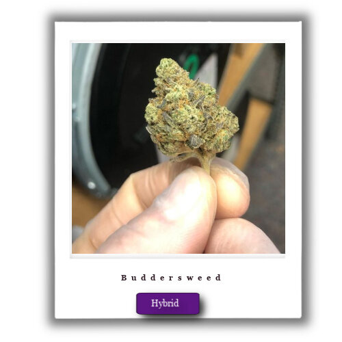 Chemdawg weed for sale