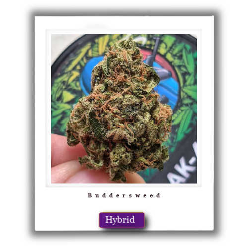 AK 47 weed for sale