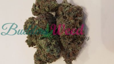 Black Widow weed for sale