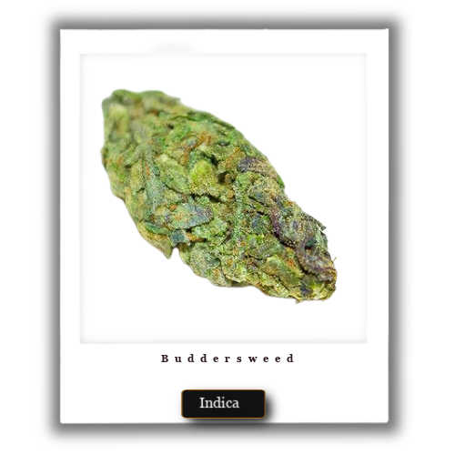 Blueberry OG weed deals