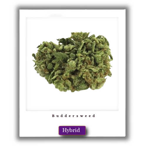 Bruce Banner weed for sale