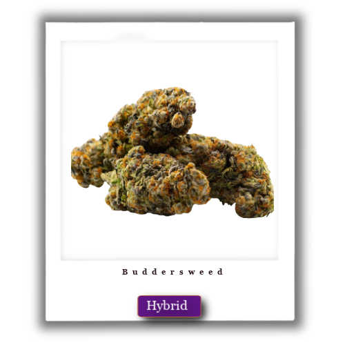Wedding Cake weed for sale