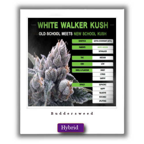buy White Walker Marijuana